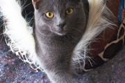 Meine Katze Gino